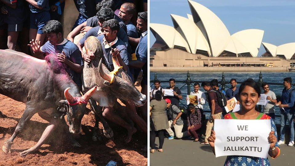 Tamils from These Countries also Protested for Jallikattu 1