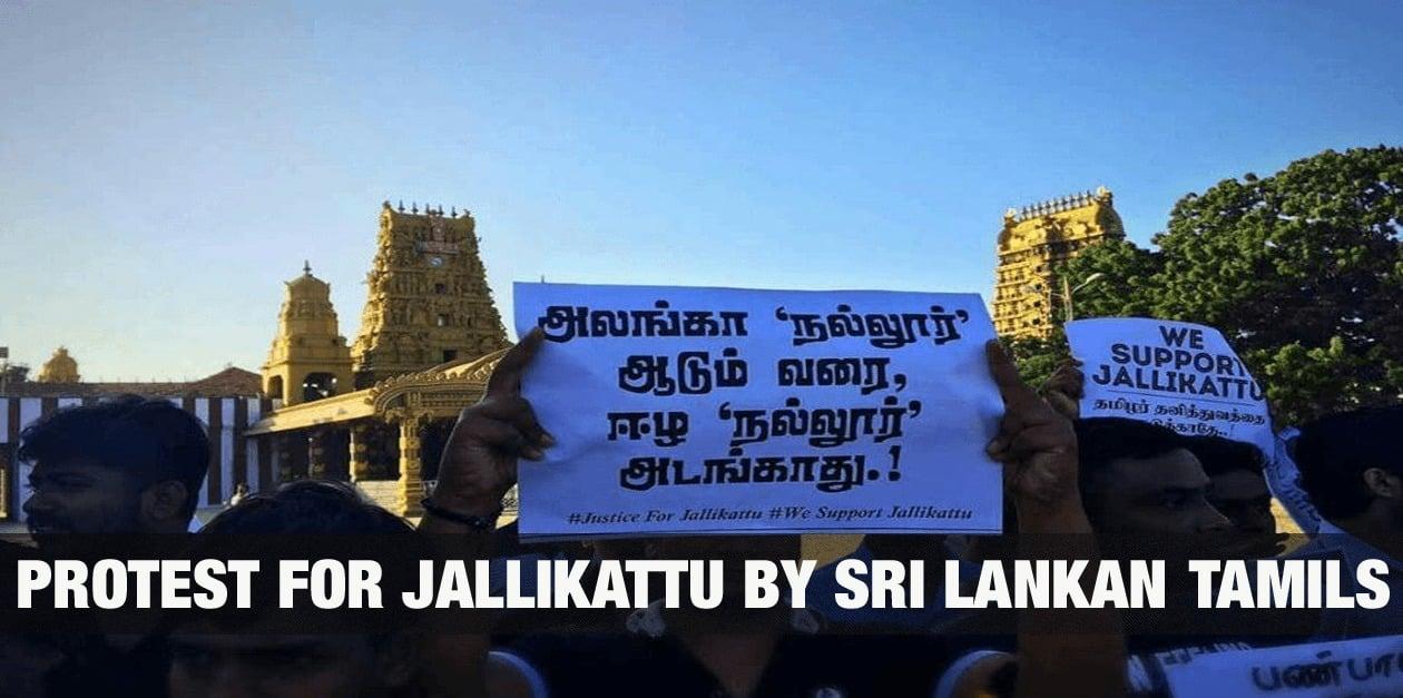 Protest for Jallikattu by Sri Lankan Tamils 6
